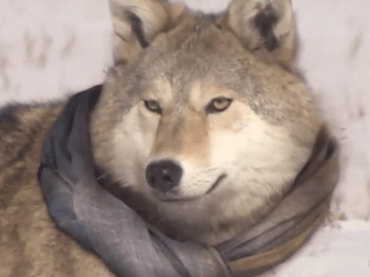 В Улан-Удэ на девушку 20 лет напала стая собак
