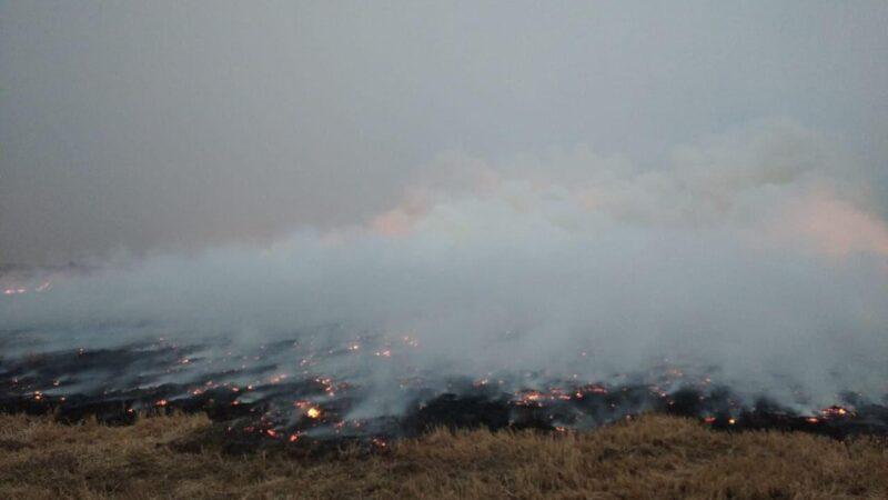 Лесные пожары в Якутии – 2020